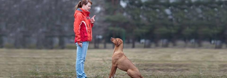 clases_perro