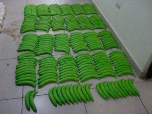 plátanos mariguana